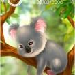 Funny Koala