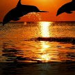 2 dolphins with great sunset